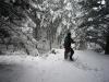 ricci-und-das-wildschwein-winter.jpg